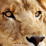 MacOS10.7 Lion + VMware Fusion3のスクリーンショットとか