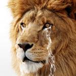 『Lion Recovery Disk Assistant』でUSBストレージにリカバリーメディアを作ってみた