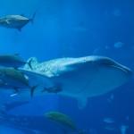 沖縄県 美ら海水族館へ行ってきました