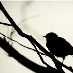 MacBook Pro Retinaの解像度を最大限に活用できるアプリ『Display Menu』が使える!